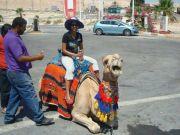 2013AugHolyLand-302-camel-ride